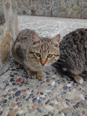 201002キプロスマルタA (229)