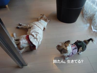 201003りんちゃんち (40)