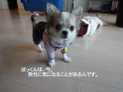 201003りんちゃんち (38)