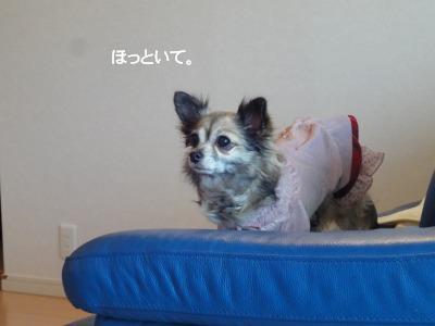 201003りんちゃんち (42)