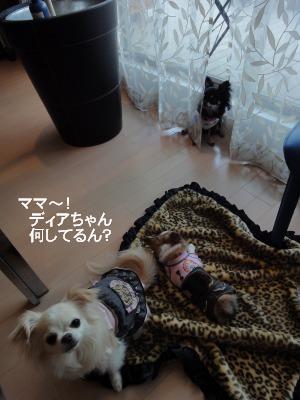 201003りんちゃんち (48)