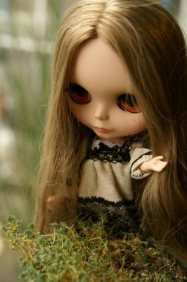 201003ブライスとチワワ (43)
