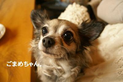 201004篠山 (67)