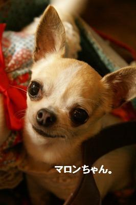 201004篠山 (61)