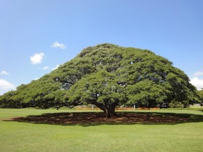 201004ハワイA (18)