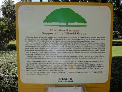 201004ハワイA (20)