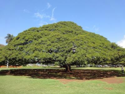 201004ハワイA (17)