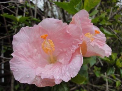 201004ハワイA (97)