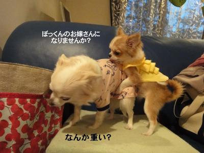 201004リンちゃん家 (19)