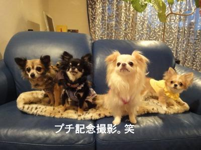 201004リンちゃん家 (30)