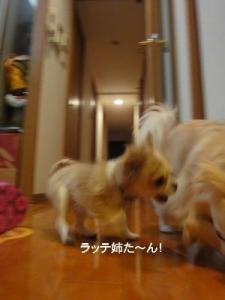 201004イタパリ7 (4)