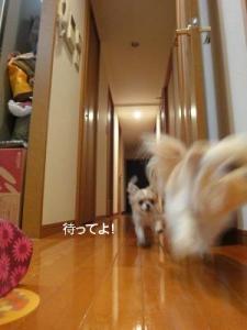 201004イタパリ7 (5)
