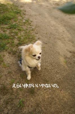201004めいちゃんと。 (11)