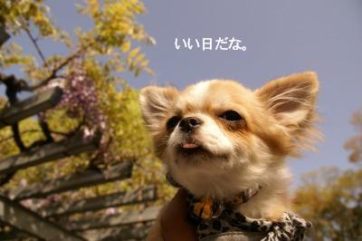201004めいちゃんと。 (20)