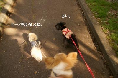 201004めいちゃんと。 (17)