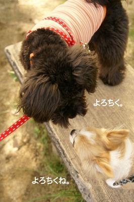 201004めいちゃんと。 (12)