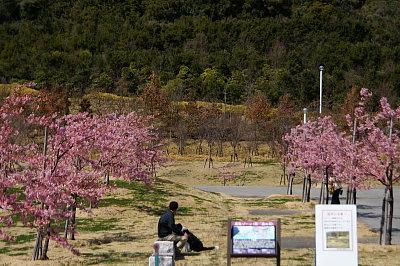 0303-12桜並木の下のパパとヴィヴィ2