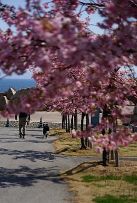 0303-13桜並木の下のパパとヴィヴィ