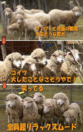 0320-20文字入り羊の群れS