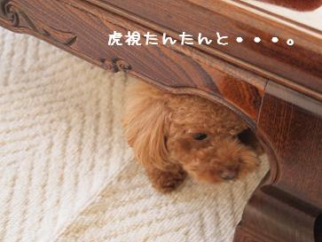 新年会chacoちゃん2