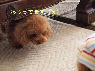 新年会chacoちゃん3
