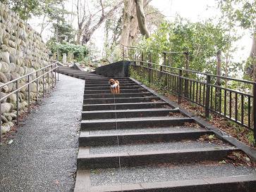 お散歩・階段1