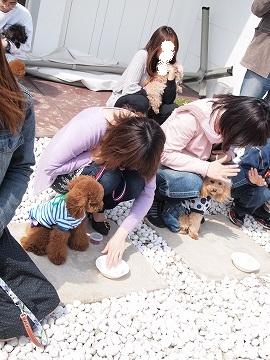 2010 04 29_福井ドッグカフェ_1160