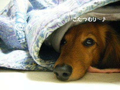 コタツで昼寝は気持ちいいんだよね~~。起きたときノド乾くし頭痛くなることもあるが、やめられない・・・。