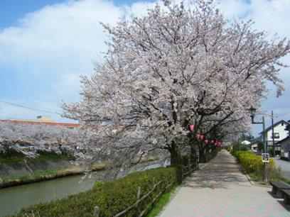 ホント、桜って綺麗だねぇ~♪
