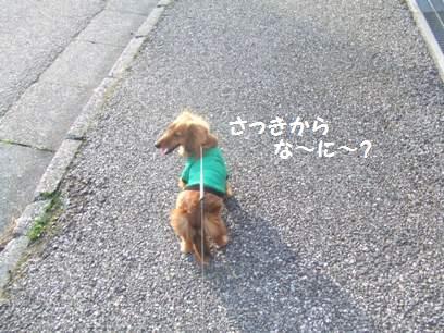 ニヤニヤしながら、犬に声かけてたけど、見られてたかな?