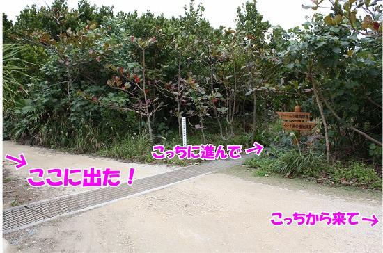 0_20100214232606.jpg