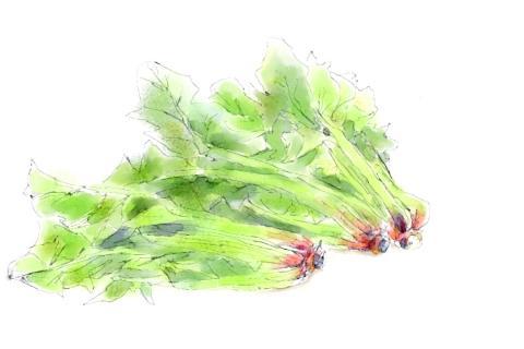 ホウレン草