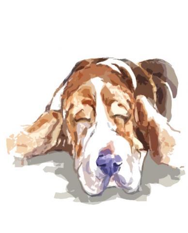 バセットハウンド犬2
