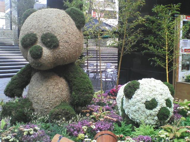 panda_20090407201223.jpg