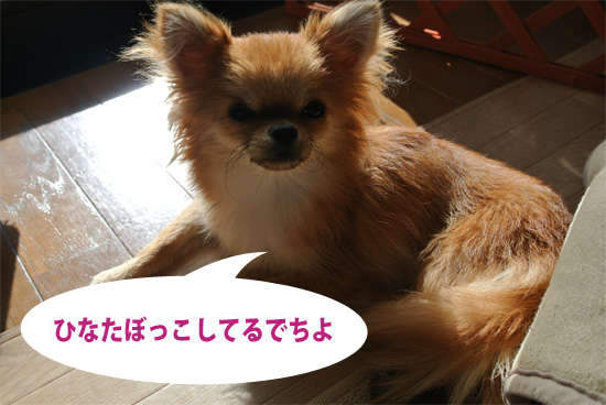 DSC_0058_2.jpg