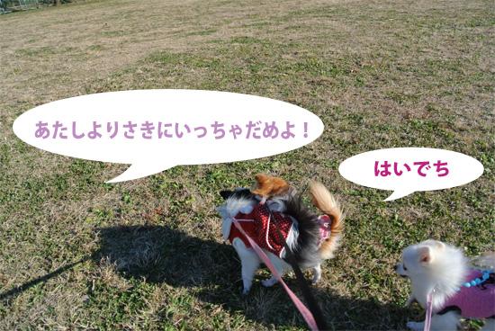 DSC_0133_2.jpg