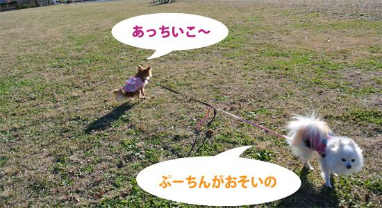DSC_0161_2.jpg