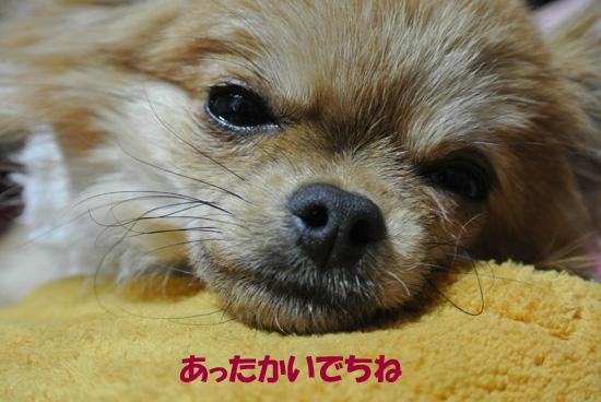 DSC_0646_2.jpg
