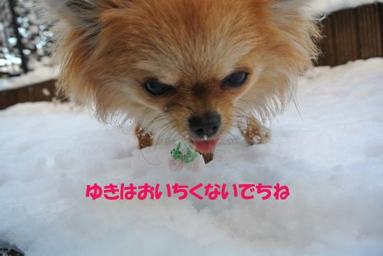 DSC_0831_2.jpg