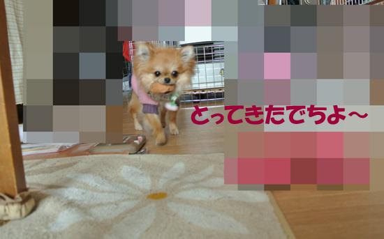 DSC_0861_2.jpg