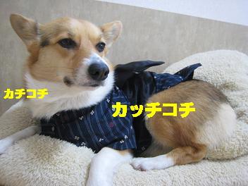洋服 キライ!