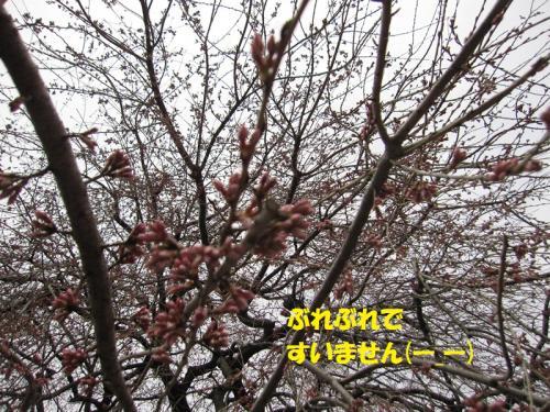IMG_4601_20120403124419.jpg