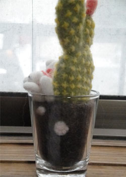 多肉植物 猫 ①-3