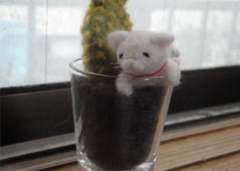 多肉植物 猫 ①-2