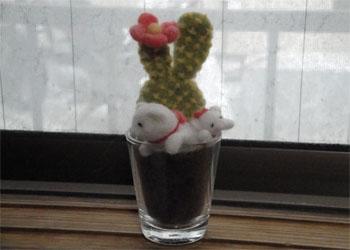 多肉植物 猫 ①-1