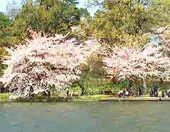 大宮公園2
