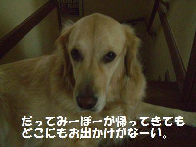 CIMG1662.jpg