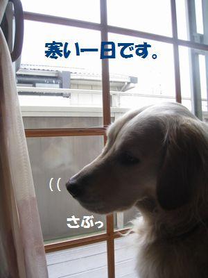 IMG_0580.jpg