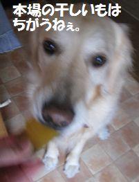 IMG_0687.jpg