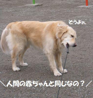 IMG_0699.jpg